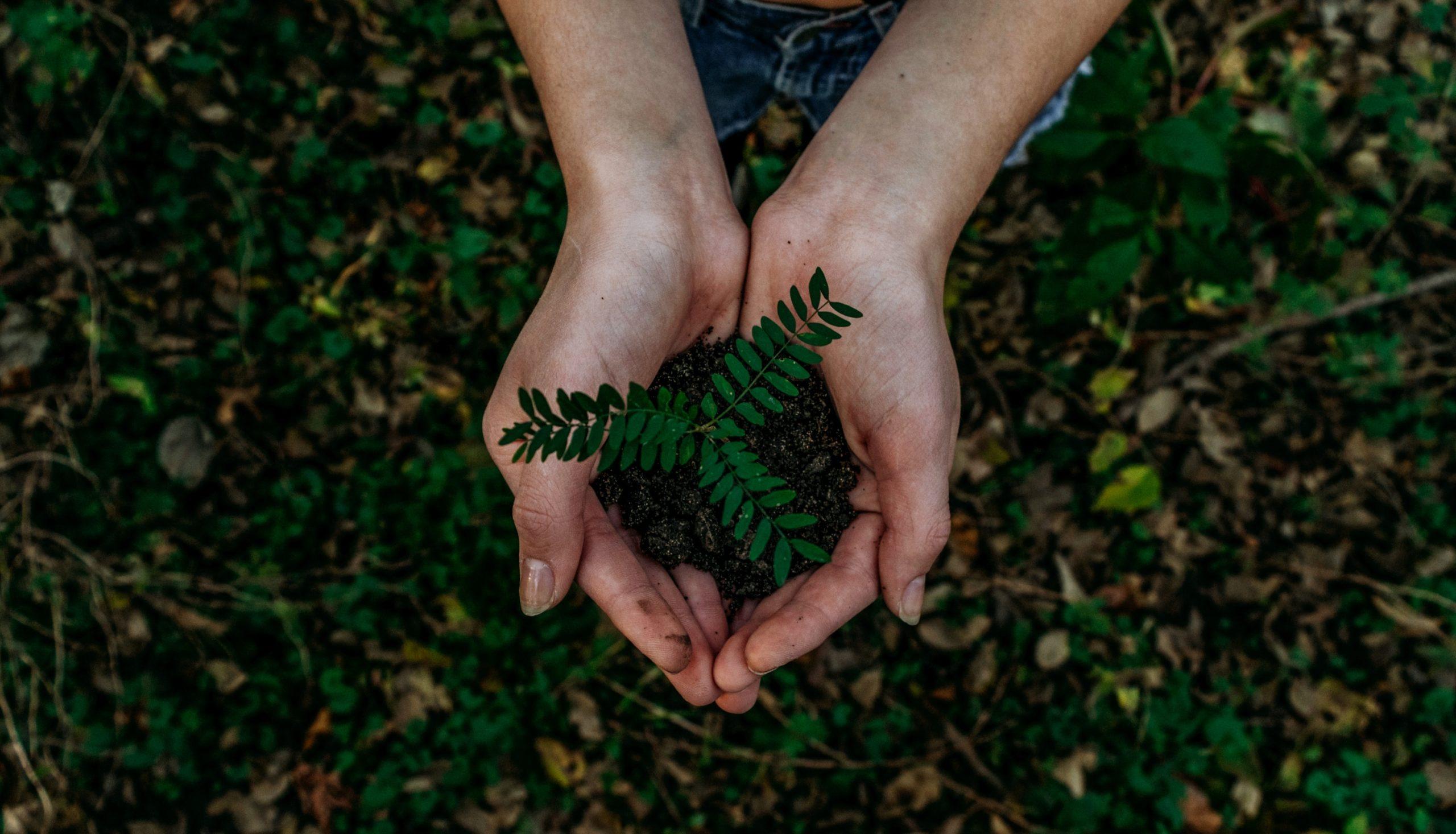 Hände halten Erde mit Pflanze