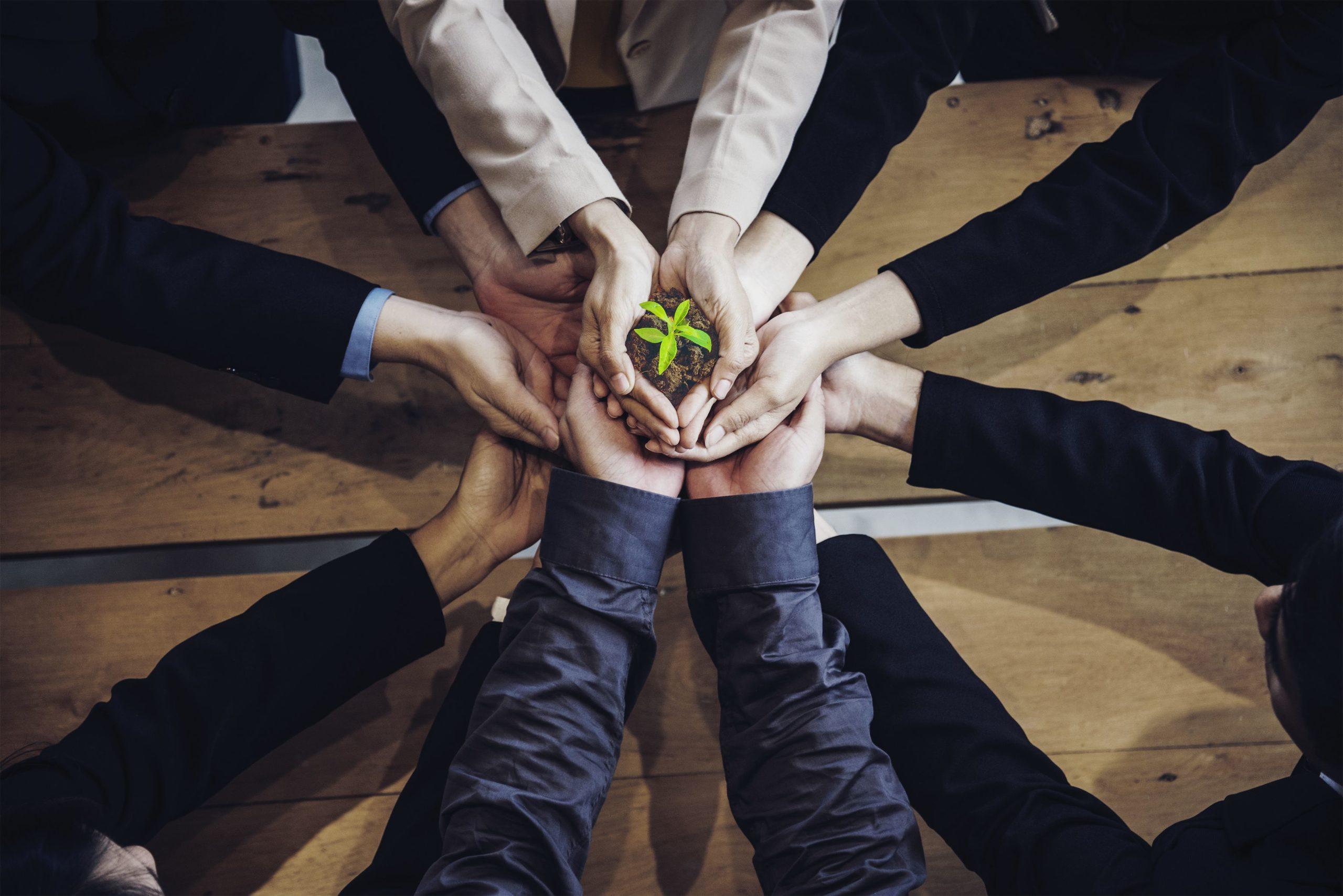 Viele Hände halten eine Pflanze und symbolisieren damit nachhaltiges Handeln