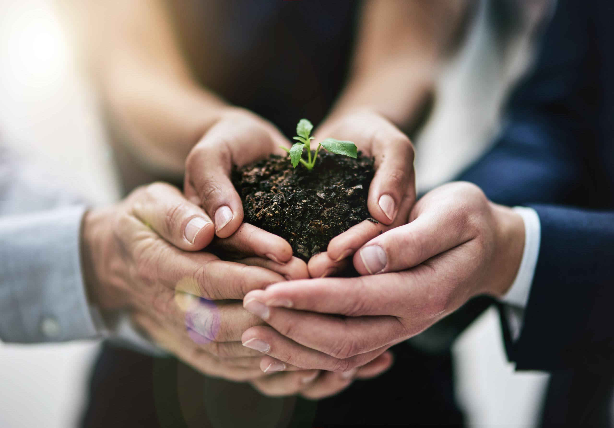 Ausschnitt aus einem Team von Kollegen, die eine aus der Erde wachsende Pflanze halten.