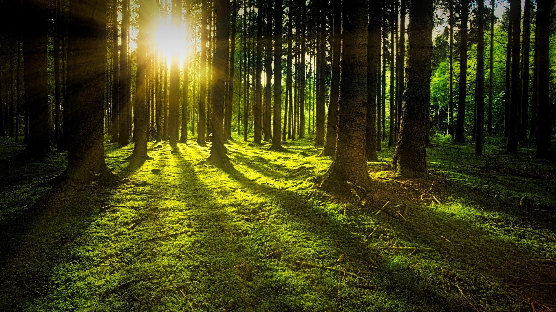 Sonne und Bäume